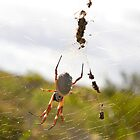 Golden Orb Spider 1 near Cervantes in Western Australia by Leonie Mac Lean