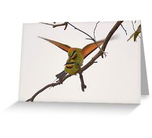 mating Rainbow Bee Eaters Greeting Card