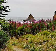 Wildflower-framed Cove by Martha Sherman
