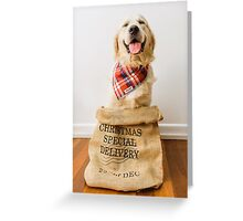Christmas golden retriever puppy Greeting Card