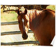 Horse Sense Poster
