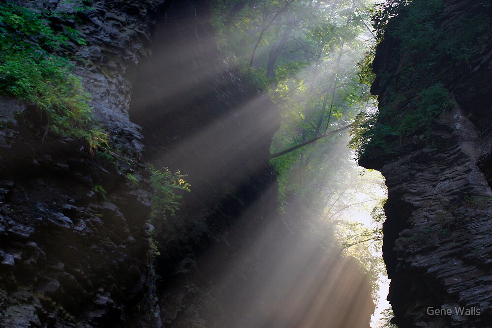 Life-Giving Rays! by Gene Walls