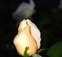 Light peach colored bud by ♥⊱ B. Randi Bailey