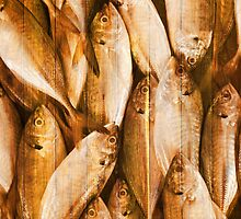 fish pattern on wood by naphotos