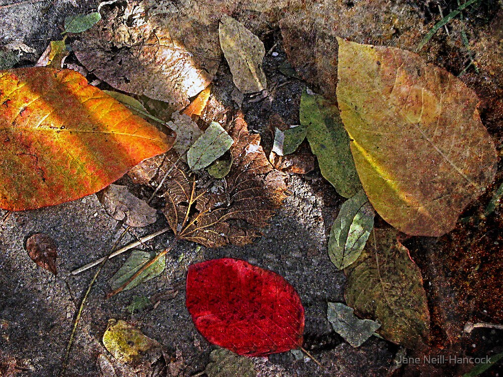 One Red Leaf in the Shadows by Jane Neill-Hancock