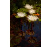 Angelic lilies Photographic Print