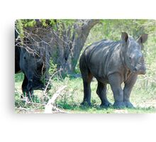 WILL HE MAKE ADULTHOOD - WHITE RHINOCEROS -  Ceratotherium simum - WIT RENOSTER Metal Print