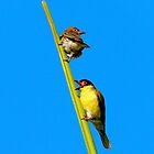 Birds of NT by Lynette Higgs
