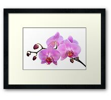 Orchid Flowers - Pink Framed Print