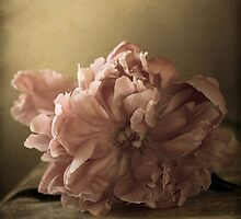 Pink Peony by ClaireMarie Photography