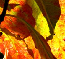 Fall Walk in my Neighborhood -CloseUp   ^ Sticker
