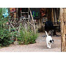 Bar Dog Photographic Print