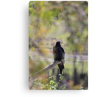 eagle - sneak peak Canvas Print