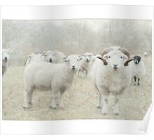 Woolly Sheepies Poster