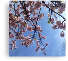looking up to spring  Canvas Print