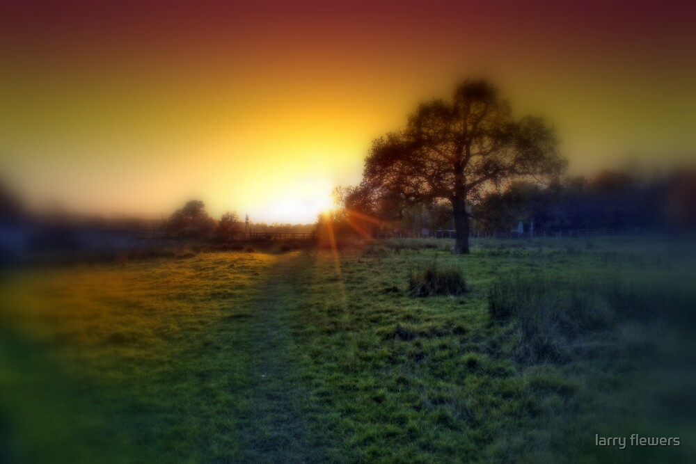 Oak tree at sunset by larry flewers