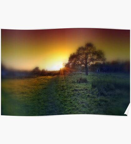 Oak tree at sunset Poster