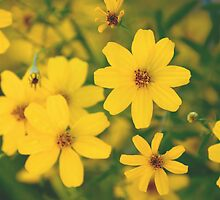 When Life Gives You Yellow by photojeanic