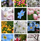 Spring Flowers by photonista