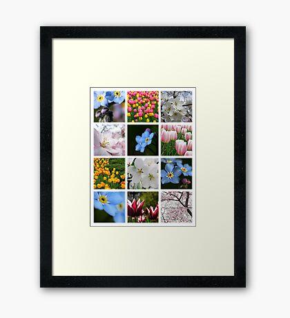 Spring Flowers Montage 1 Framed Print