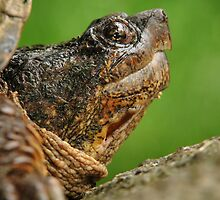 Turtle's Rock! by milkayphoto