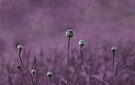 Purple garden by Anne Staub
