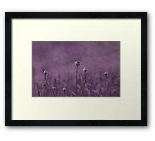 Purple garden Framed Print