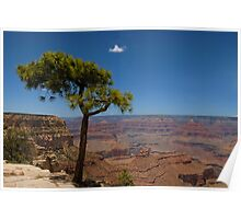 Solitary Tree, Grand Canyon Poster