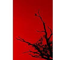 Bird Red Photographic Print