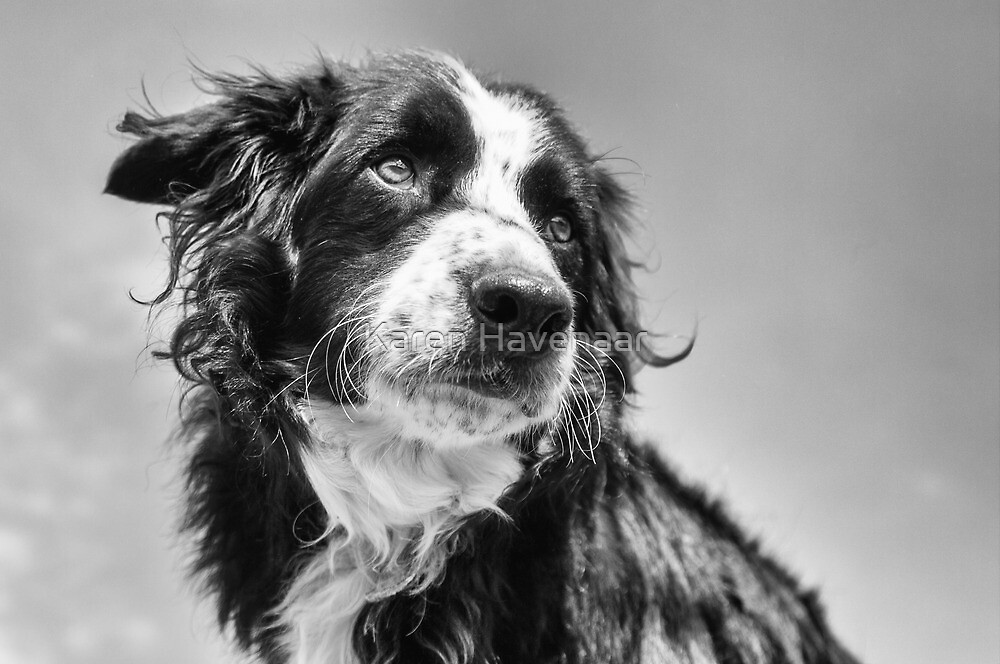 Dog in black & white by Karen Havenaar