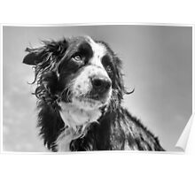 Dog in black & white Poster
