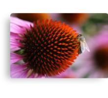 bee on coneflower Canvas Print
