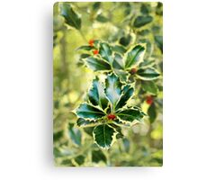 Winter Holly. Canvas Print