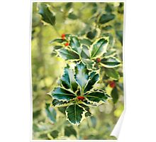 Winter Holly. Poster