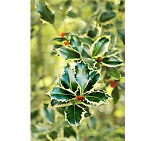 Winter Holly. Photographic Print