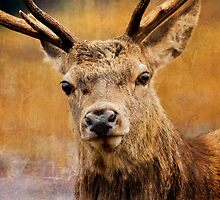 Deer On Canvas by derekbeattie