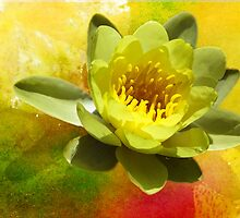 Water Lily by Ellen Cotton
