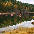 Montana 13 by Kerri Gallagher