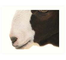 Goat Face Art Print