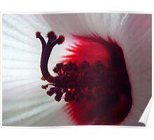 Hibiscus heart.. Poster