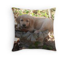 Sammy- Bird Bath Fun Throw Pillow