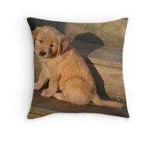 Jorgi- Sunkissed Throw Pillow