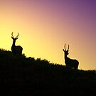 Twilight Elk by Arla M. Ruggles