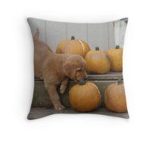 Romeo-  Pumpkin Wrestling Throw Pillow