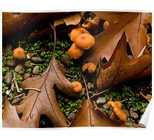 Forest Litter Poster