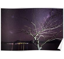 Lake Moogerah Tree By Starlight Poster