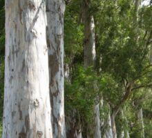Old Mugla - Marmaris Road Eucalyptus Akcapinar Sticker