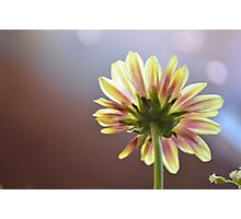 A Flower For You Photographic Print