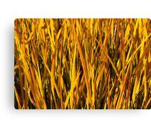 Yellow Grass Wall Art Canvas Print