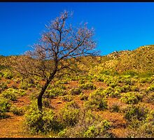 Epilogue by Bette Devine
